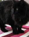Cat_blanket
